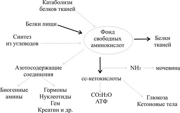 Общая схема метаболизма